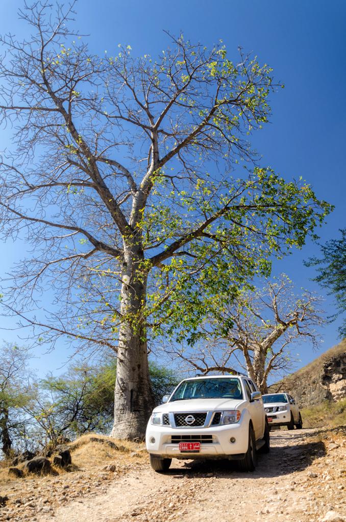 Arabskie baobaby